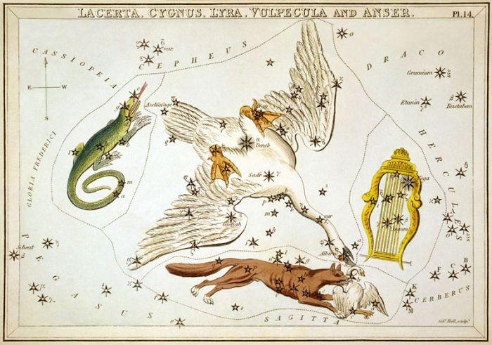 Sidney_Hall_-_Urania's_Mirror_-_Lacerta,_Cygnus,_Lyra,_Vulpecula_and_Anser.jpg